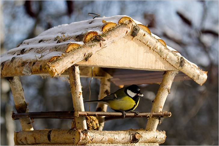 Кормушка для птиц своими руками: подборка идей
