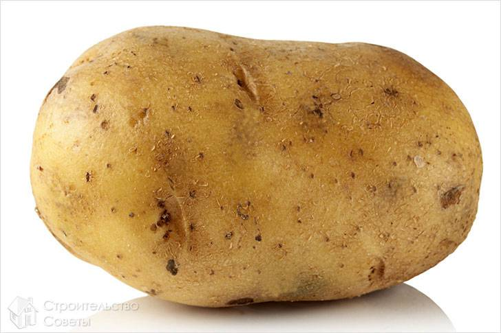 Картофель против ржавчины