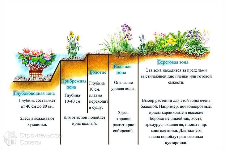Схема оформления водоема для рыб