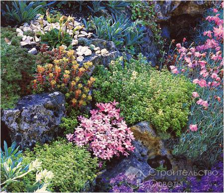 Цветы наделяют сад способностью к