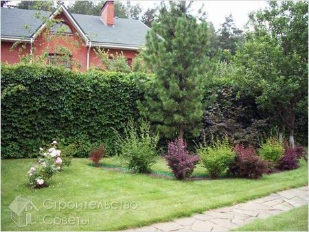Зачем нужна живая изгородь.  Какие растения, деревья и кустарники использовать для сооружения изгороди?