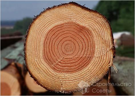 Древесина, как исходный материал