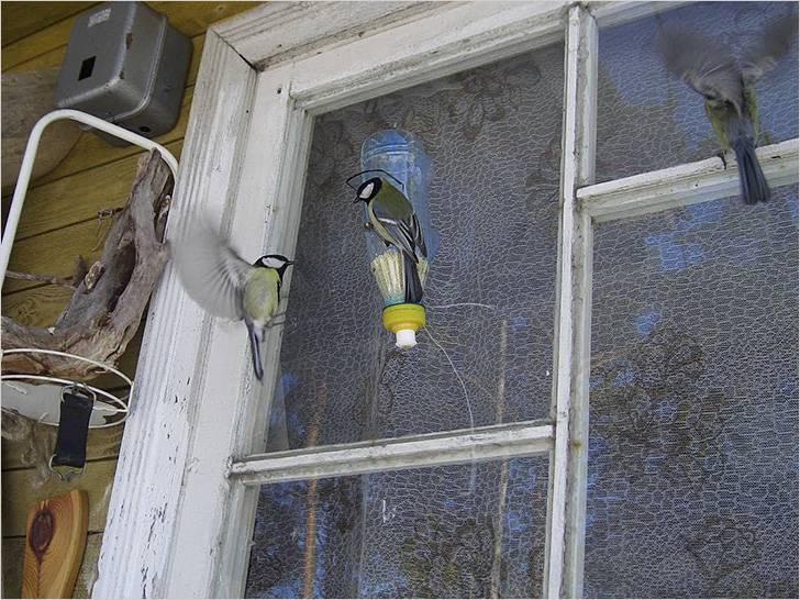 Кормушка закреплена на стекле окна