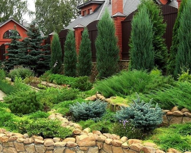 Хвойные растения в ландшафтном дизайне: советы по выбору вида и сорта