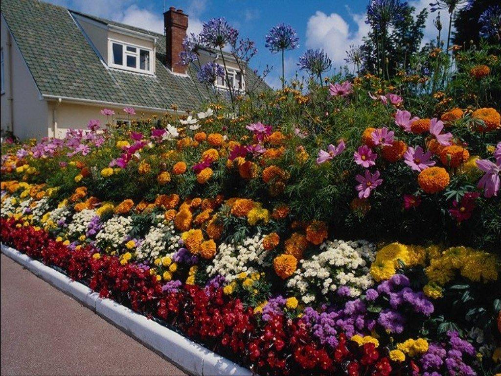 Обзор неприхотливых цветов для клумбы на даче